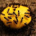 10 фактов о муравьях