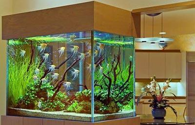 Как выбрать аквариум для рыб