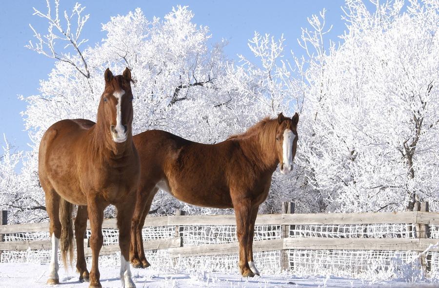 25 фактов о лошадях