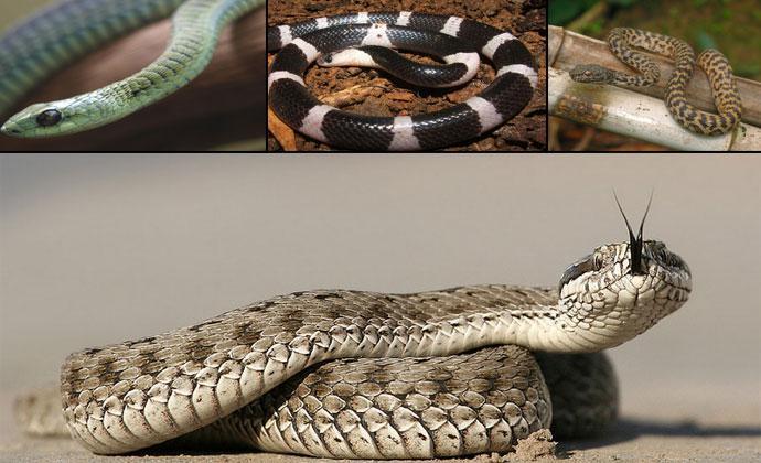 Самые ядовитые змеи планеты фото