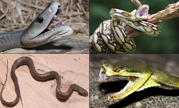 Самые длинные и большие змеи в мире фото