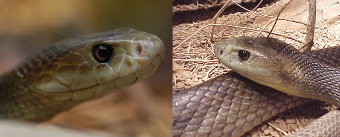 Самые ядовитые змеи планеты