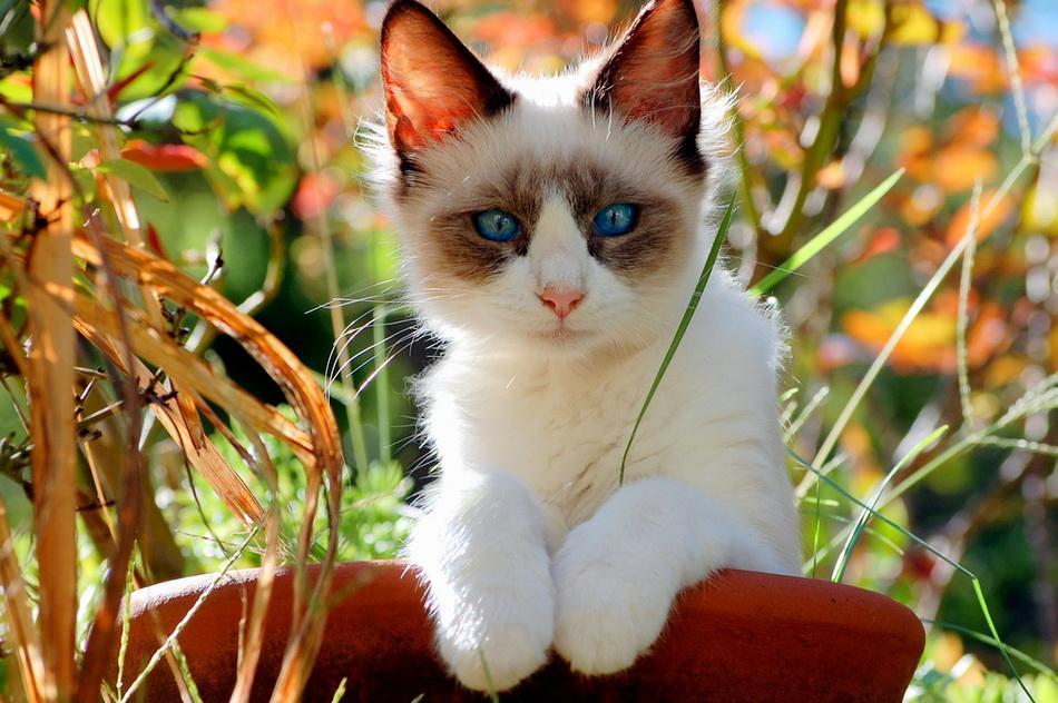 Интересные факты из жизни кошек