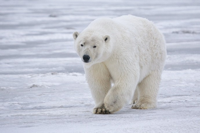 10 самых опасных животных мира