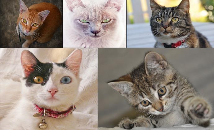 Интересные факты о кошках и котах в фотографиях