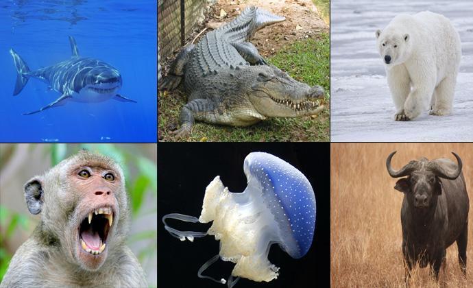 Самые опасные животные планеты (10 фото)