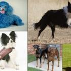 самые умные породы собак в мире фото