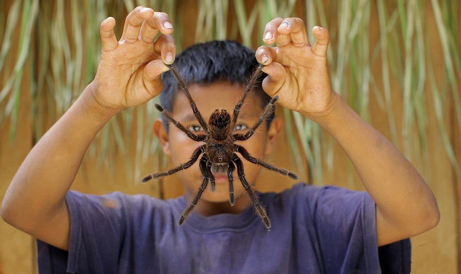 самых больших пауков мира
