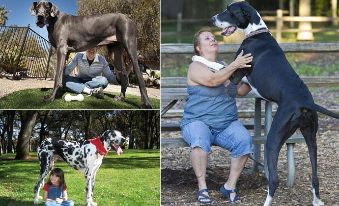 Самые большие собаки в мире в фотографиях