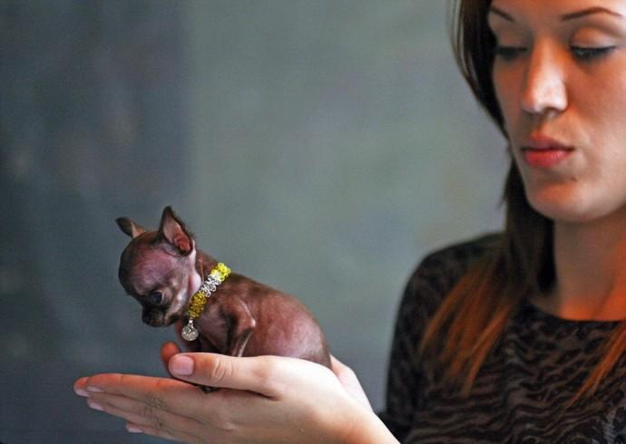 Самые маленькие собаки в мире