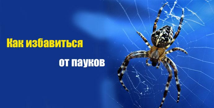 избавляемся от пауков