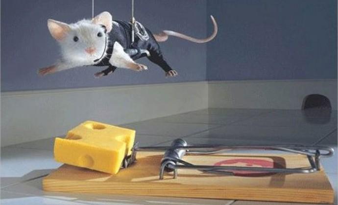стволовые клетки и мыши