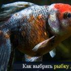 Как выбрать рыбку для аквариума