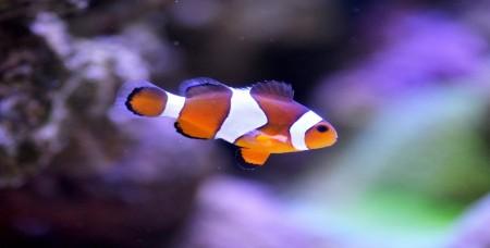 Покупка аквариумных рыбок