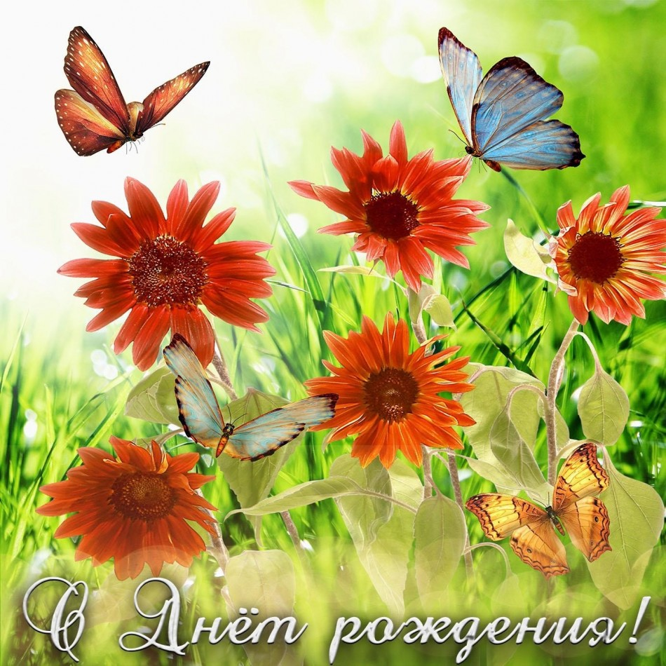 Добрая открытка с цветами и бабочками