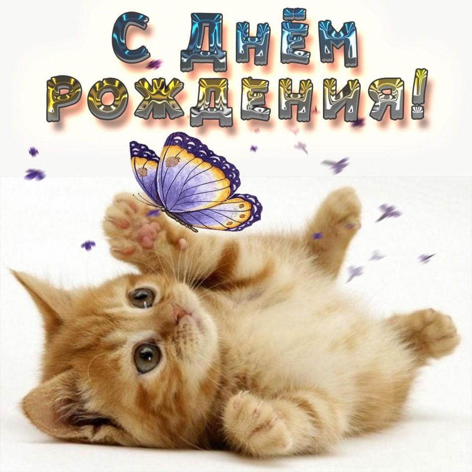 Картинка с милым котёнком на День рождения
