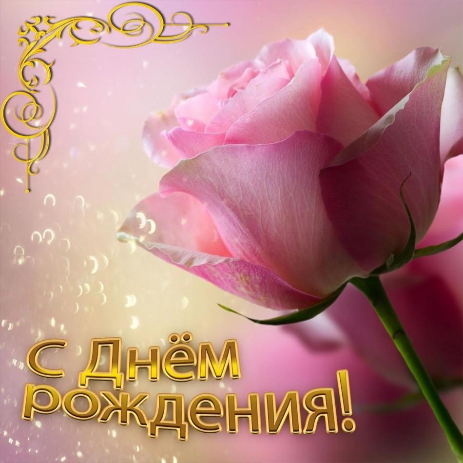 Красивая открытка с нежной розой