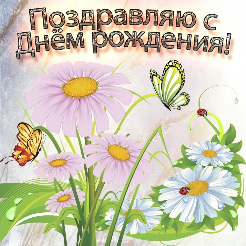 Ромашки с бабочками на красивой картинке